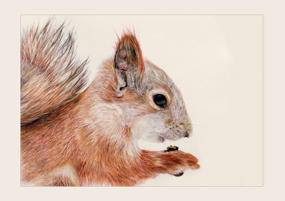 Squirrel – Colour Pencil Drawing