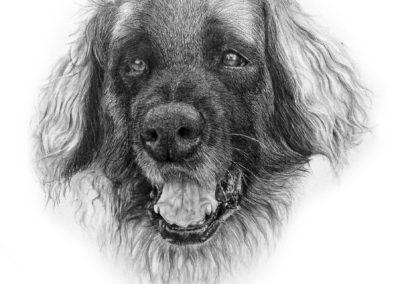 Canine – Pencil