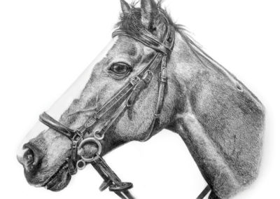 Equine Portrait 2 – Drawing