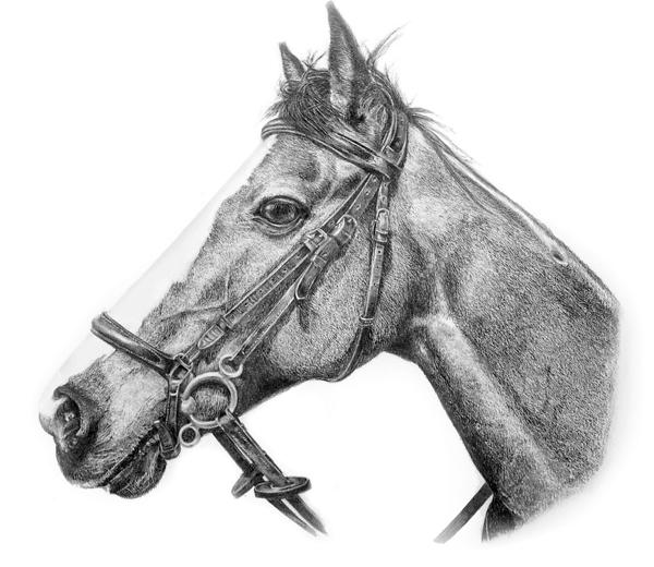 Equine Portrait 2 – Drawing