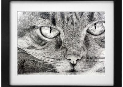 Feline – Pencil