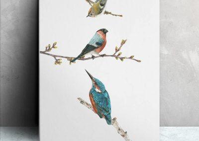 3 Little Birds Colour Pencil Illustration – Amazon